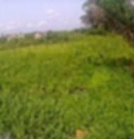 image land2.jpg