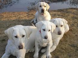 big pups 1.jpg