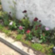 さくらびとは本日、花壇デー。__終わり次第、かんてんぱぱさんへ片づけに行きまーす