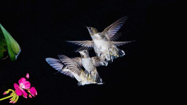 Hummingbird a sense of time.jpg