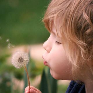 The secret physics of dandelion seeds