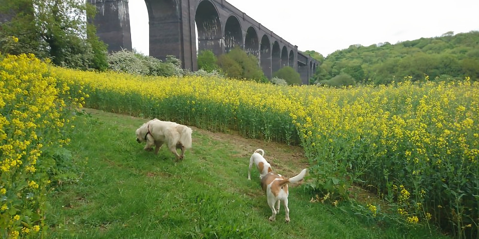 Cadeby / Consibrough Viaduct Social walk