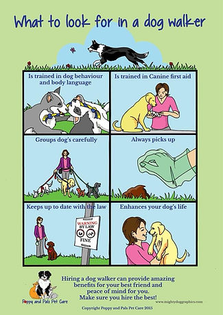 What to look for in a dog walker.jpg