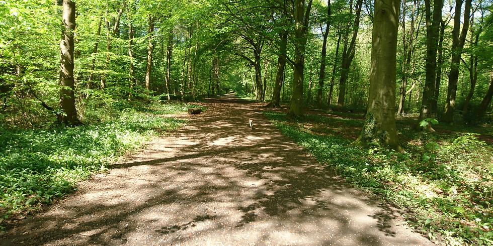 Woodland Adventure Social Walk (Melton Woods)