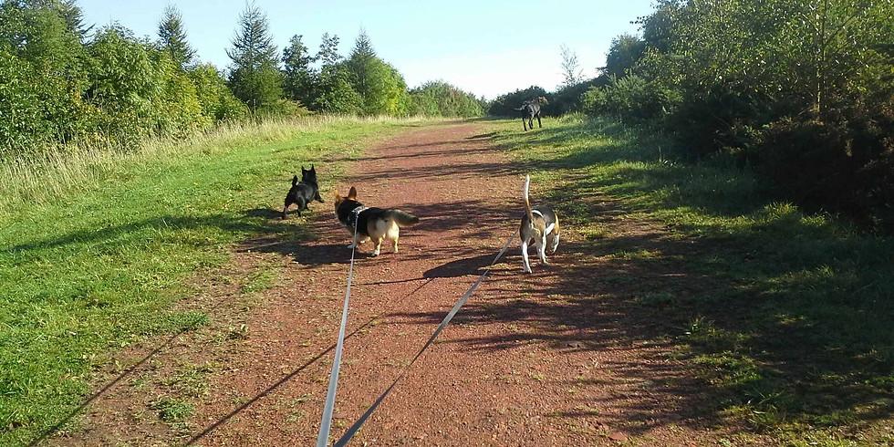 Jake's Adventure 1st Group walk