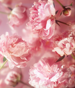 Summer Flower Meanings