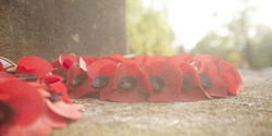 What Is the Remembrance Poppy?