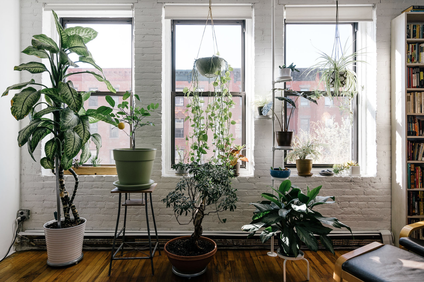 The Best Houseplant for Your Zodiac