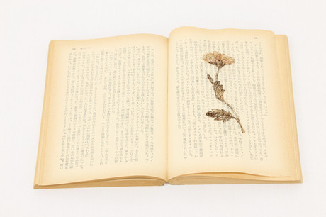 The flower on a book