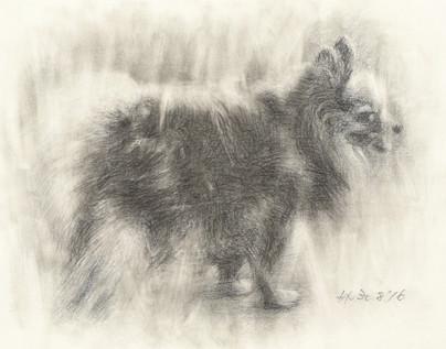 Pomeranian, 1969 (Drawing)