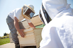 Bee Hives - Beekeeping