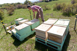 Making New Bee Hives - Beekeeping