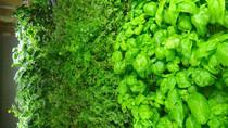 CUBIX growing microgreens