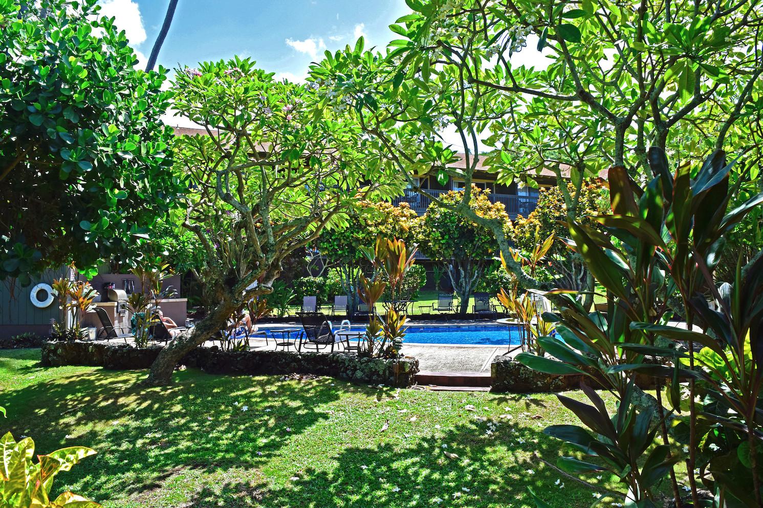 Studio - Garden View
