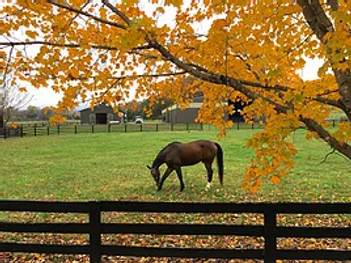 Admore - Fall with Horse.webp