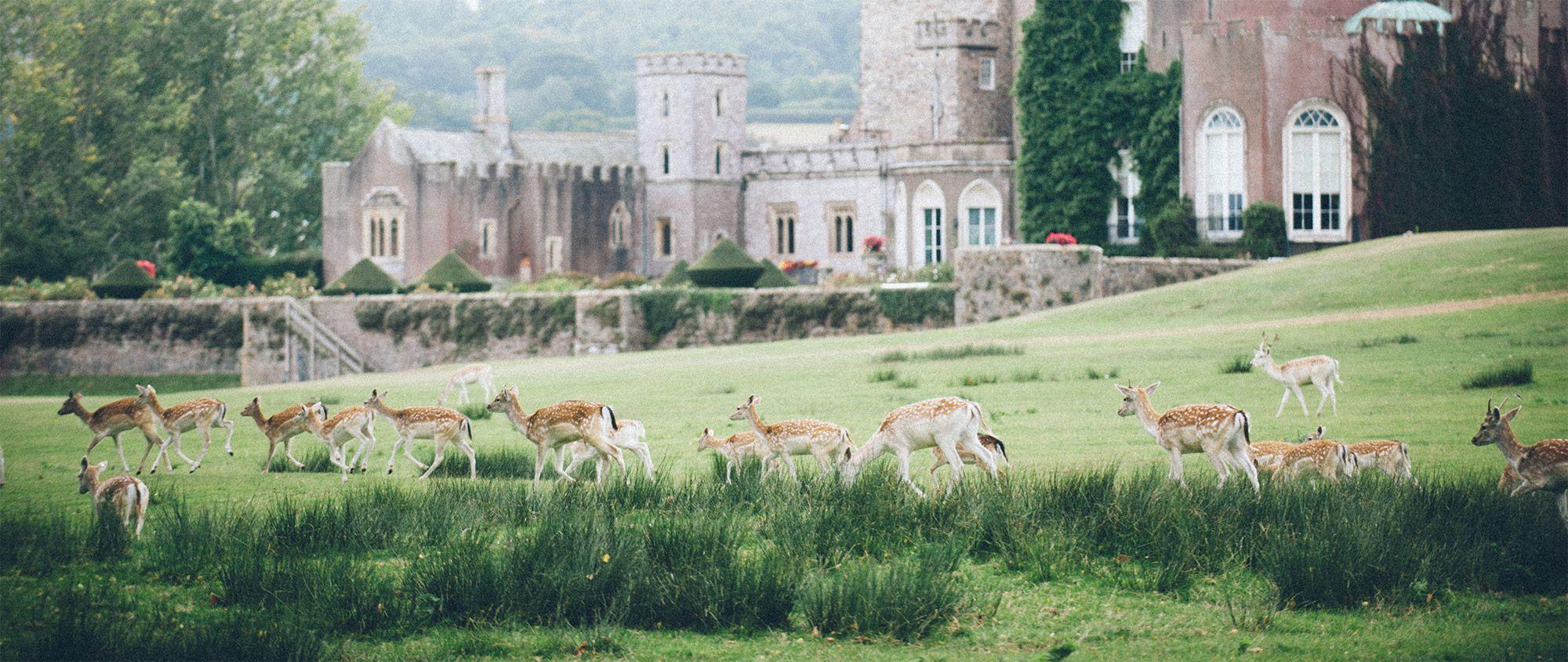 Powderham Deer Park
