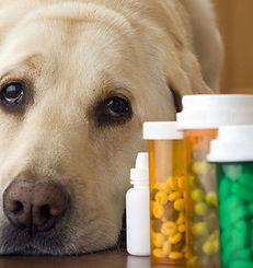 Farmaci veterinari con e senza ricetta