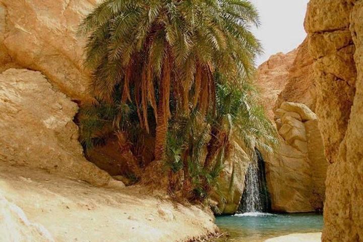 Oasis in Sahara Desert, Tunisia.jpg