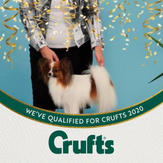 Rae Anne Kennels qualified for Crufts!