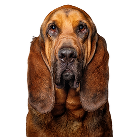 Bloodhound.png