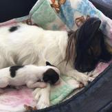 Rae Anne Kennels had puppies!