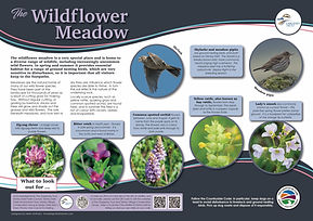 2 Wildflower 3mm.jpg