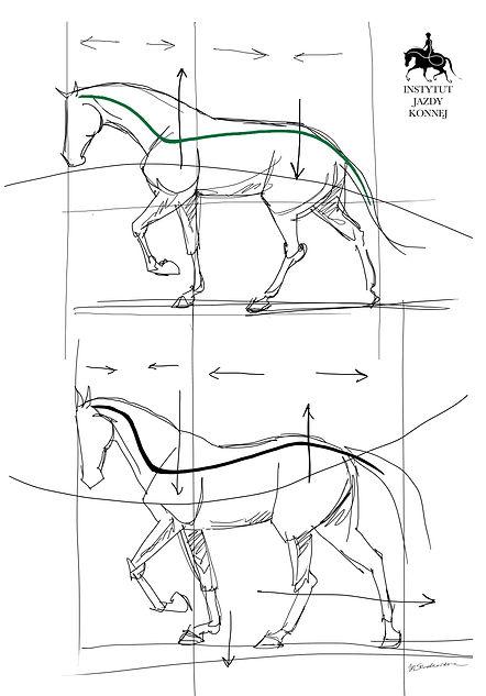 Horses spine.jpg