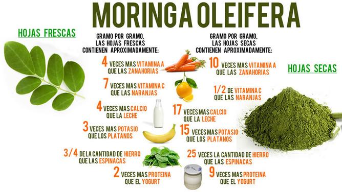 Investigadores obtienen harinas antioxidantes del árbol Moringa