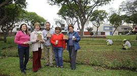 Surco, inicia sembrio de Moringa en parques públicos