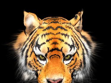 Anger Tiger