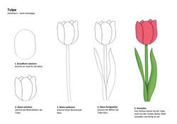 Tulpe Zeichenanleitung