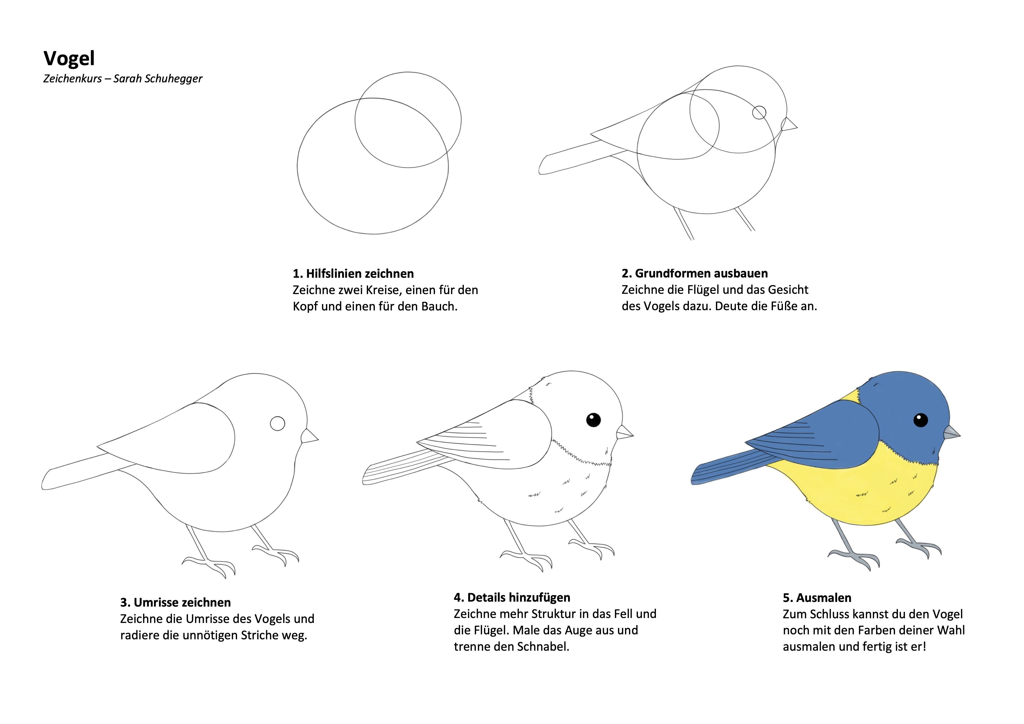 Vogel Zeichenanleitung
