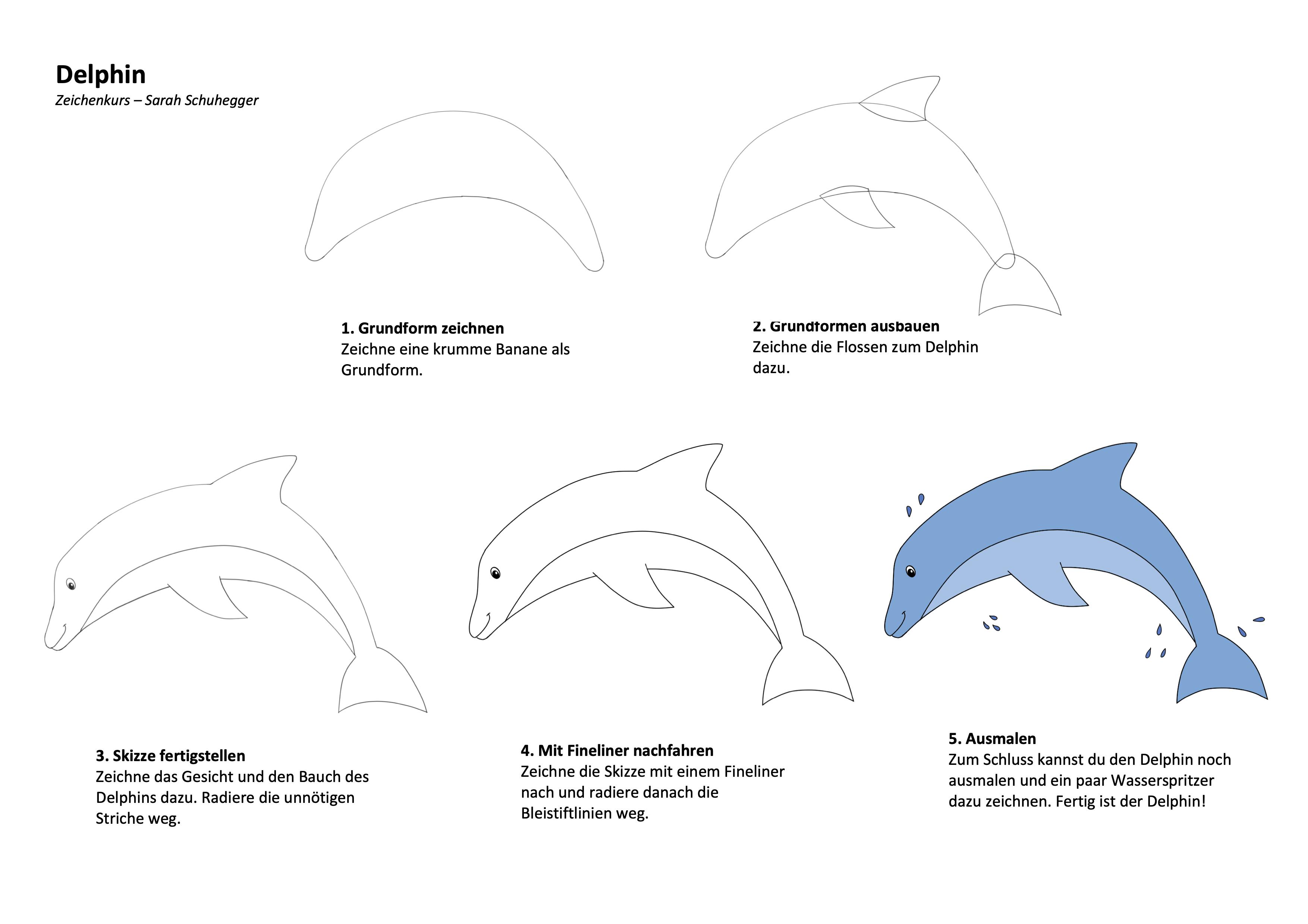 Delphin Zeichenanleitung