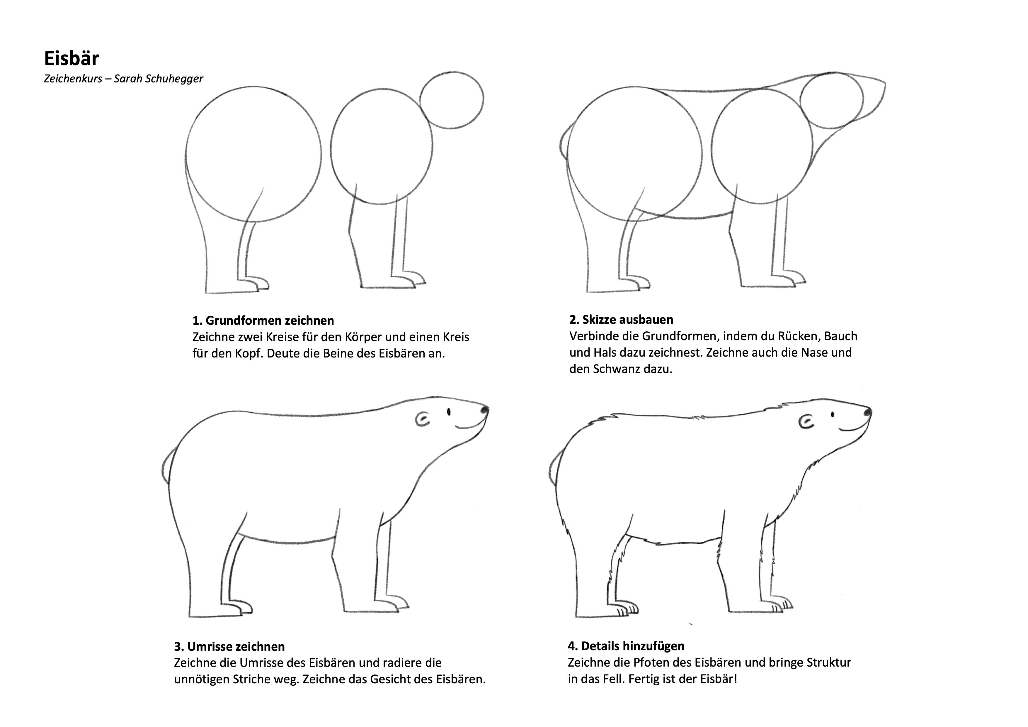 Eisbär Zeichenanleitung