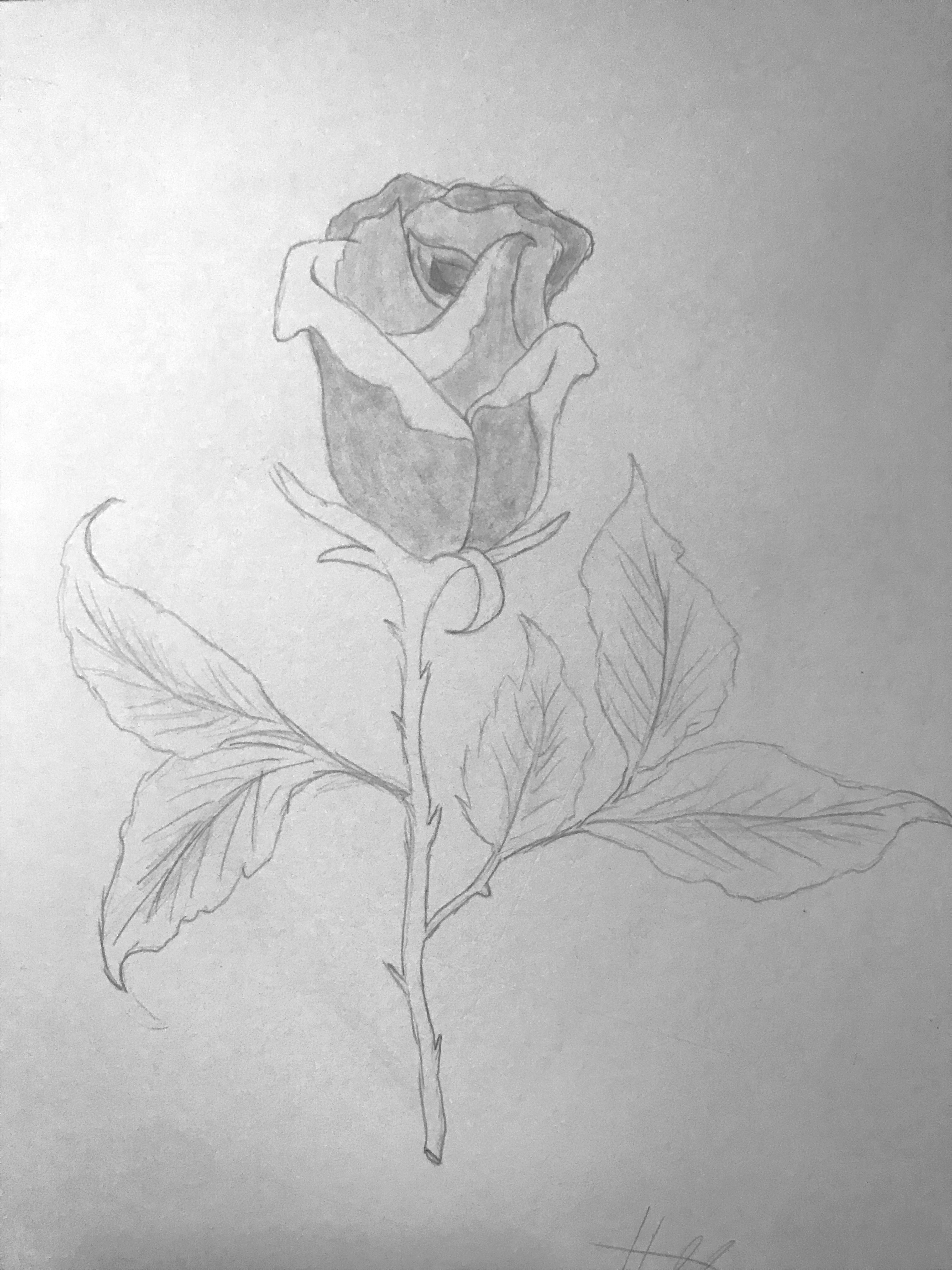 Hannahs Rose