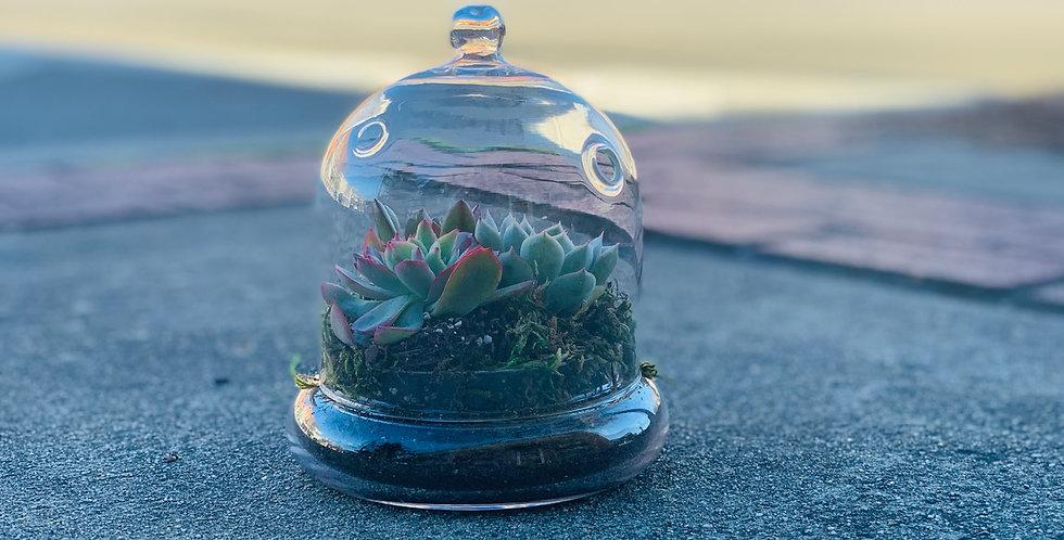 Small Succulent Terrarium