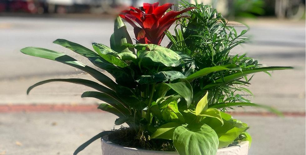 Bromeliad Dish Garden