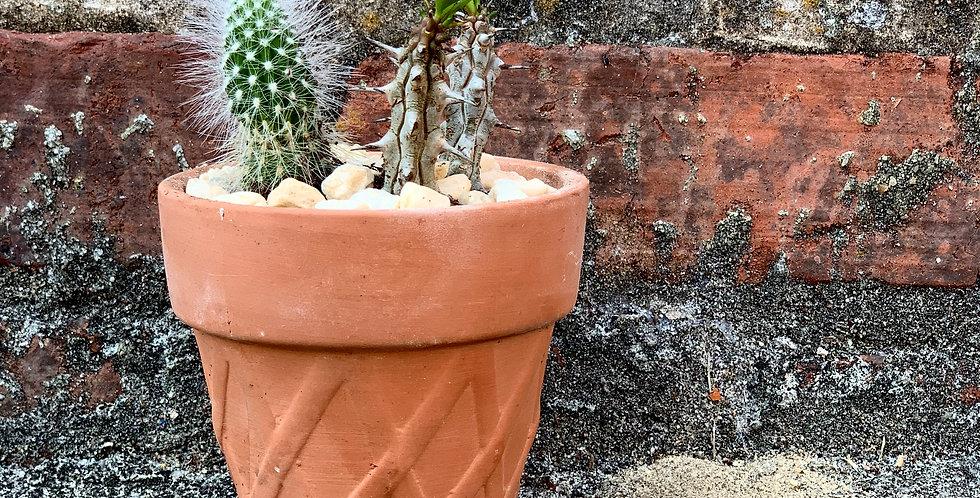 Mini Cacti Dish Garden