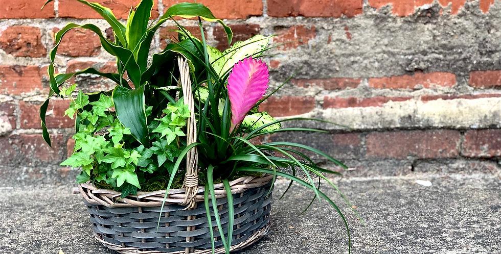 Four Piece Plant Basket