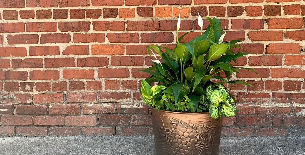 Bucket of Plants