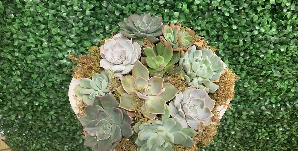 Pyrex Succulent Dish