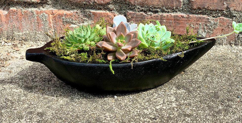Succulent Nest
