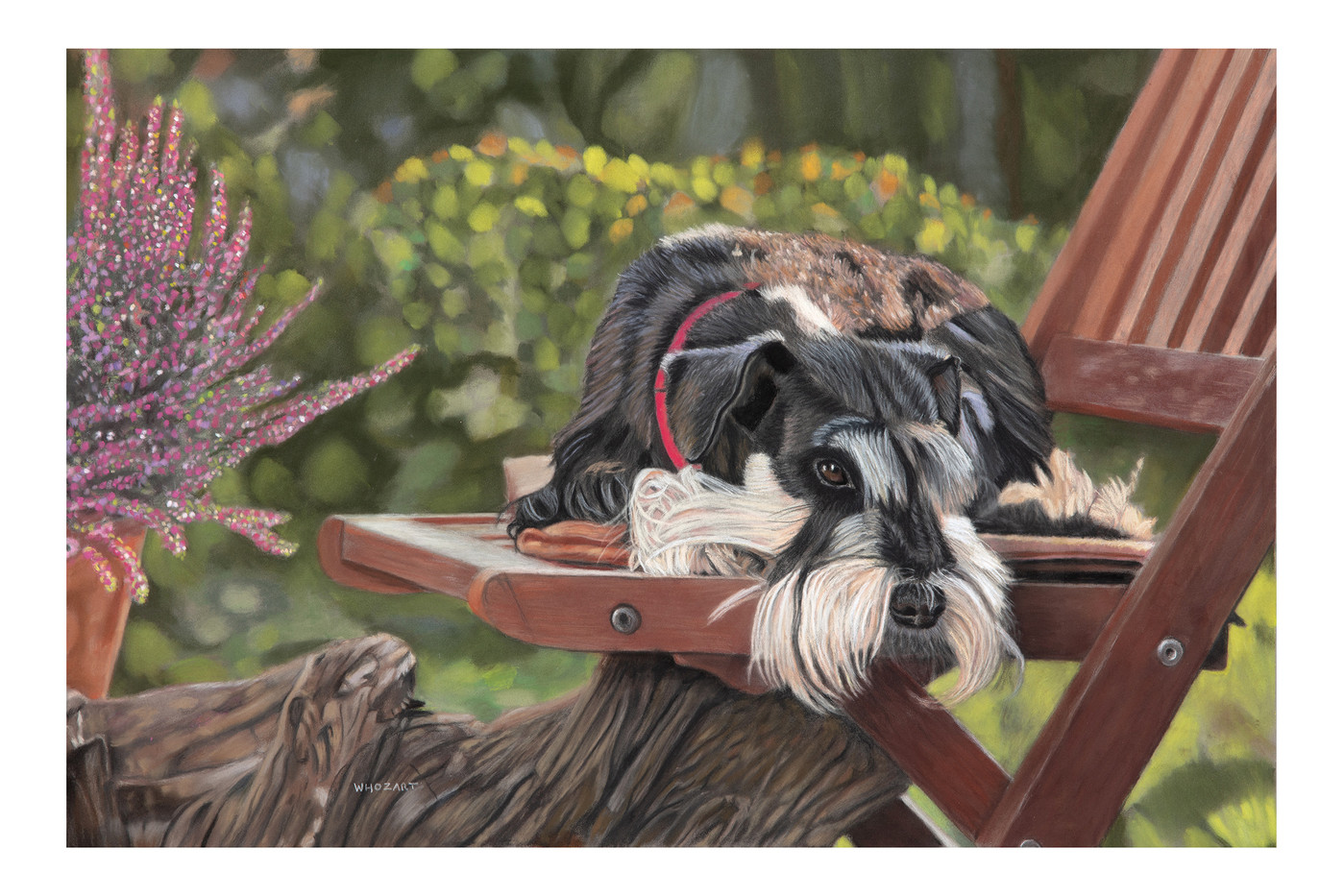 Schnauzer on the chair