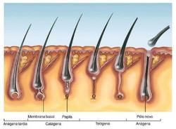 queda de cabelo Mesoterapia Botox