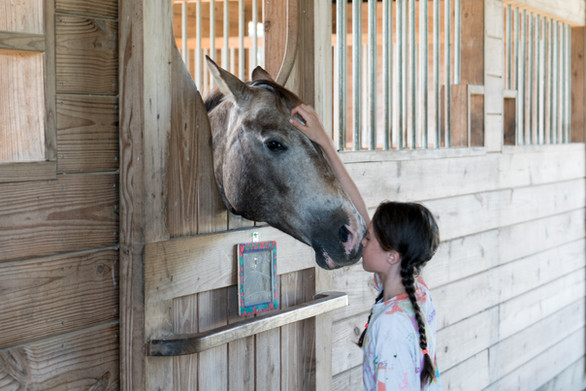 Petting the horse at The Little Red Barn