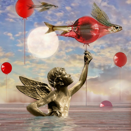 Flying Angel-fish 6b.mp4