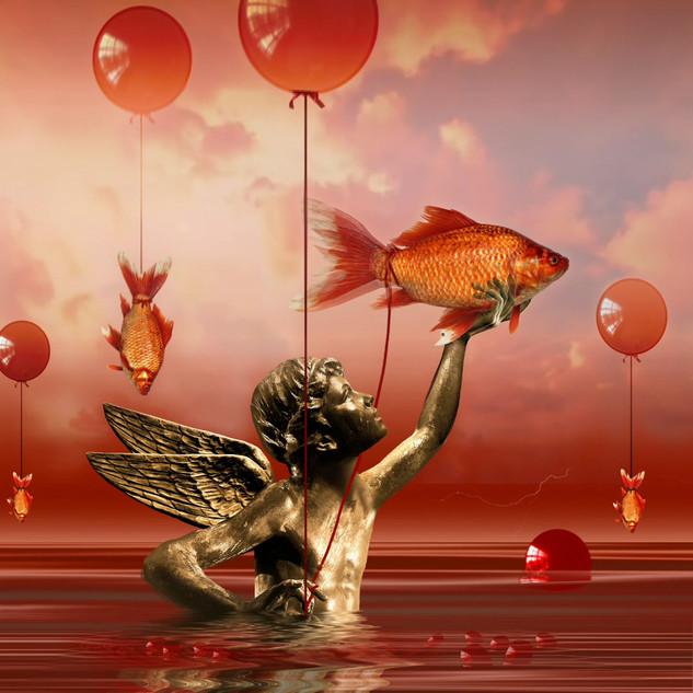 Angel-fish 6.mp4