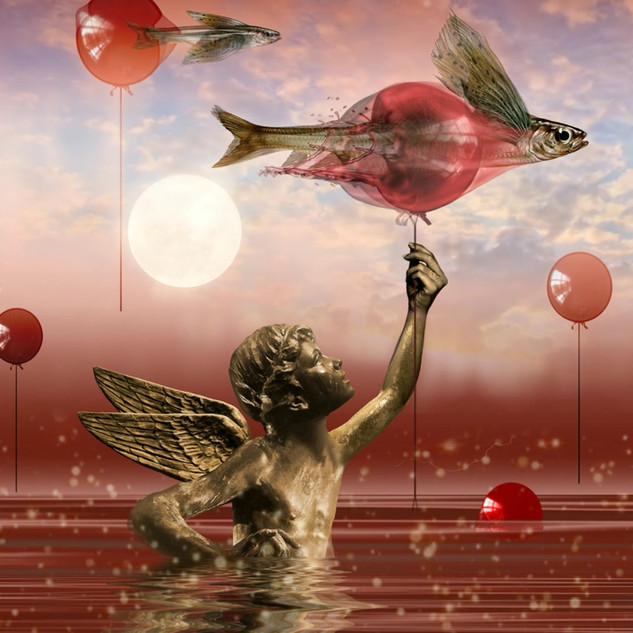 Flying Angel-fish 6.mp4