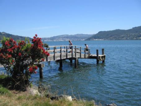 Christmas season in New Zealand – a photo essay