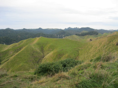 House sitting in Wanganui, the gracious lady of New Zealand